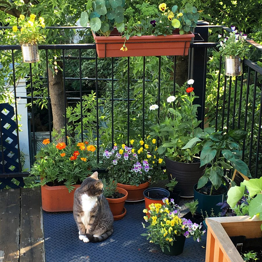 Balcony garden, potted plants, and our little cat
