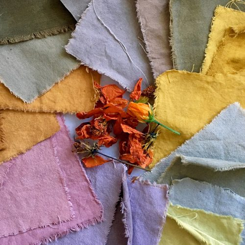 Naturally-dyed fabric swatches laying flat with some dye plants at centre