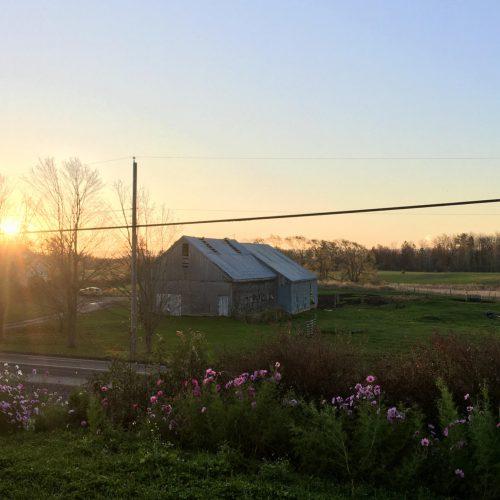 Morning sunrise, old barn, pink cosmos flowers