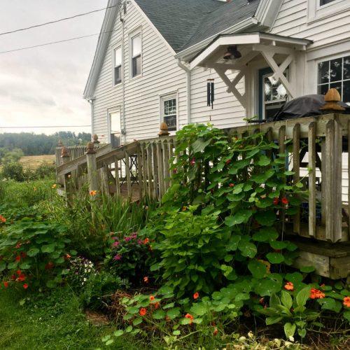 House gardens at their peak in midsummer