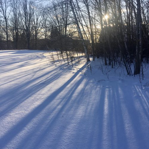 Long tree shadows, bright blue, late afternoon mid winter