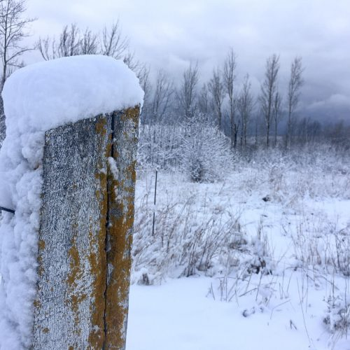 Fence post covered in snow