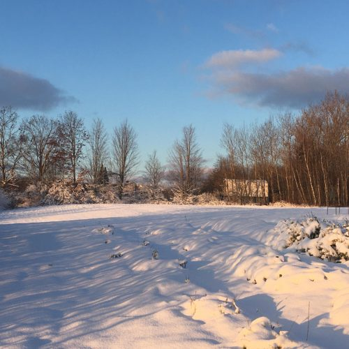 Farm rows under snow