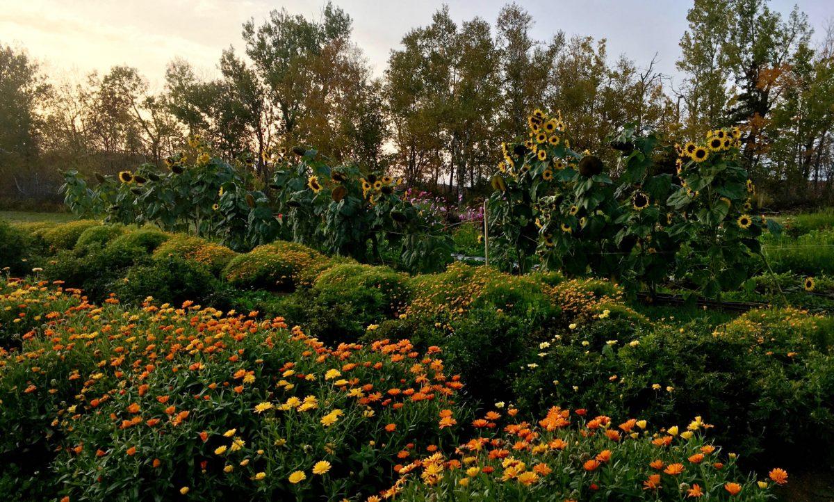 Colour crops in setting sun