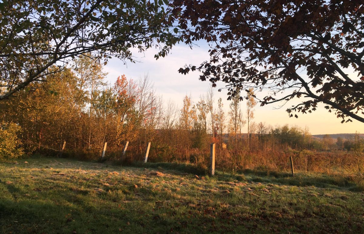 Fence posts in the late afternoon sunlight