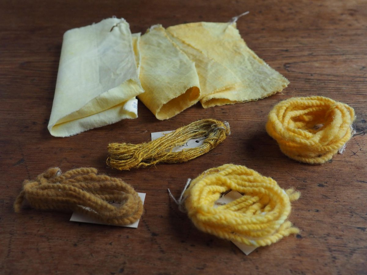 Dyer's Chamomile natural dye colour swatches