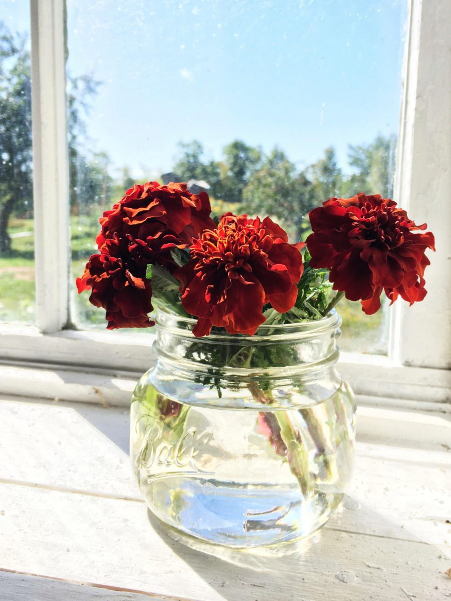 Marigolds in a vase in a barn window