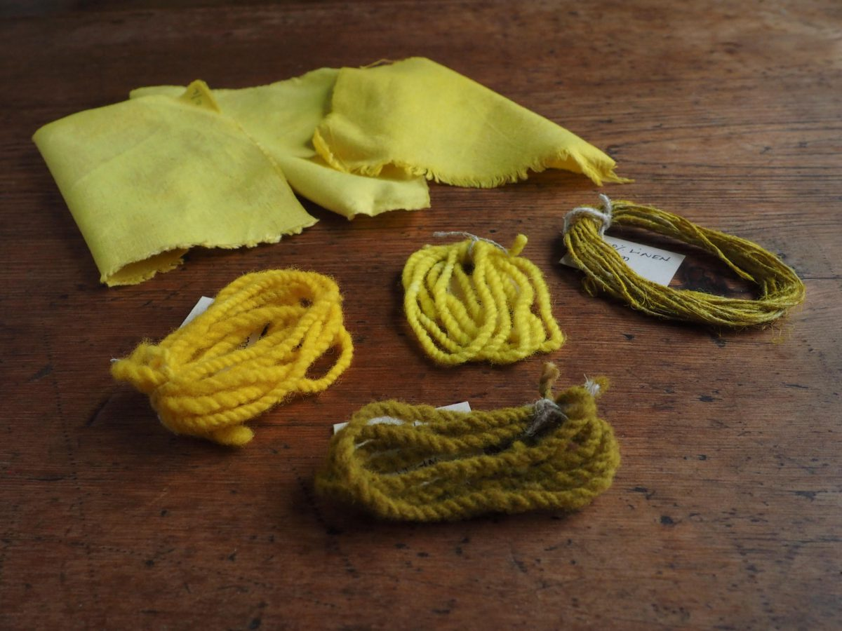 Weld natural dye colour swatches