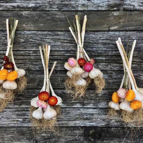 Bundles of dried garlic with multi-coloured straw flowers