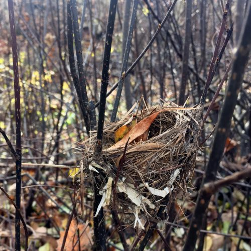 Delicate bird's nest with fall leaves in the woods