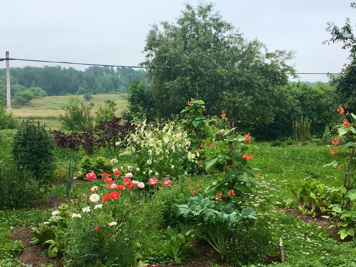 Flowers and veggies in a kitchen garden
