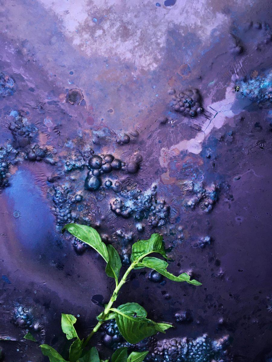 Indigo dye fermenting
